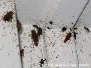 тараканы на стенке