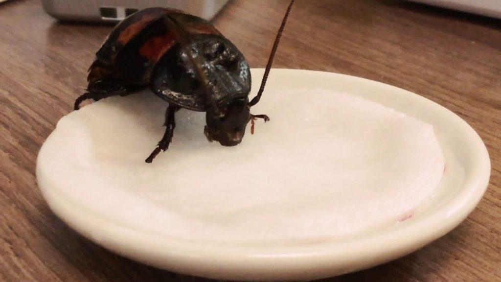 как тараканы пьют воду