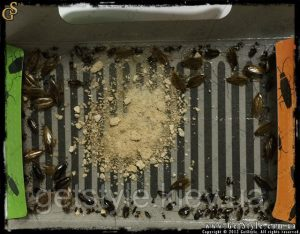 приманка для тараканов