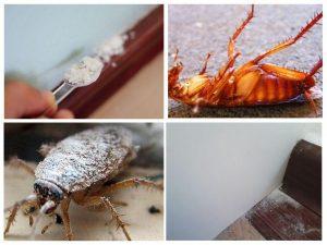 Дуст от тараканов