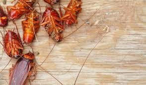 как избавиться от тараканов в квартите