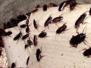 яд для тараканов