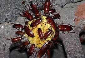 яд от тараканов